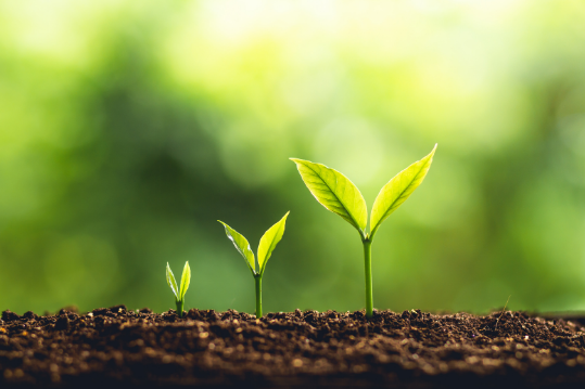 Enhance Your Growth